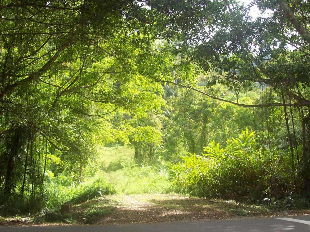 salah satu spot hutan di Rimbo Panti