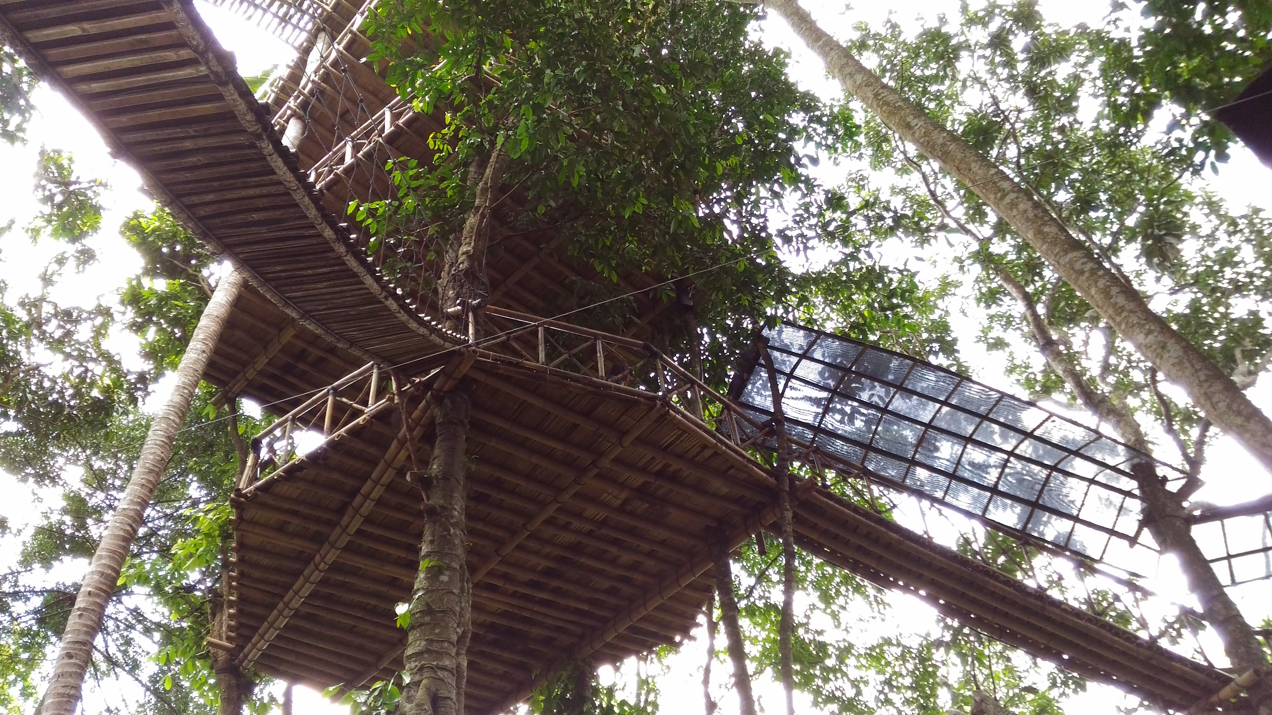 rumah pohon karangasem