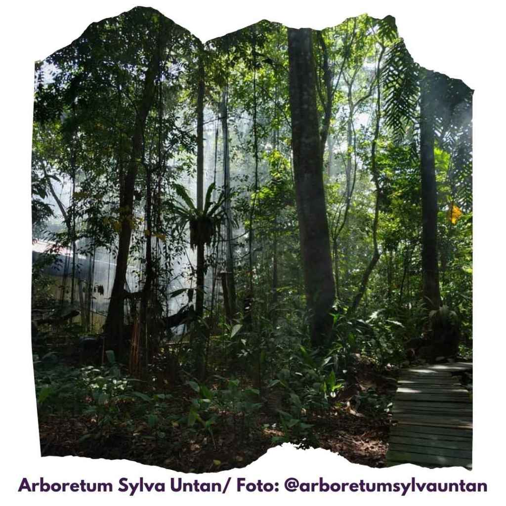 arboretum sylva untan